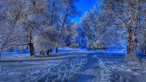 美しい冬景色22